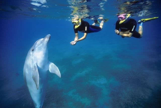 The Dolphin Reef